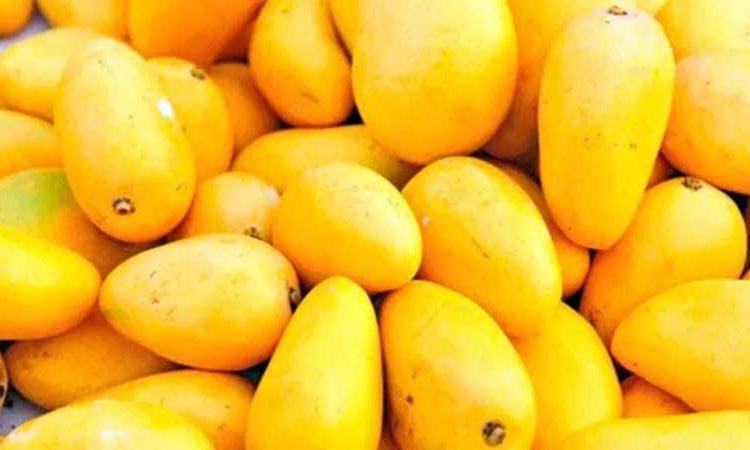 Los 10 productos agropecuarios más exportados por México